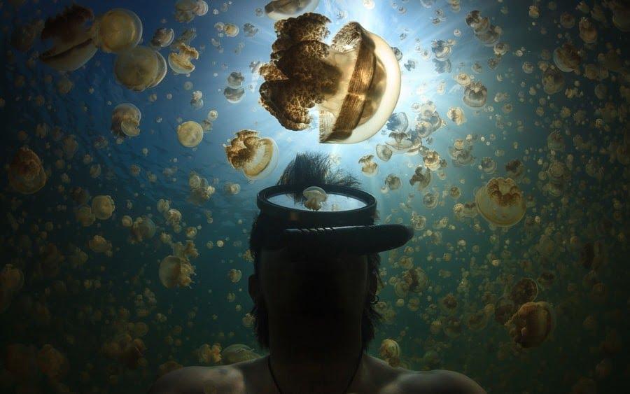 foto dunia bawah laut indonesia