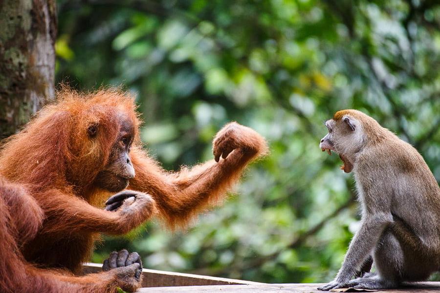 7 Fakta Unik Taman Nasional Gunung Leuser yang Perlu Kamu Tahu