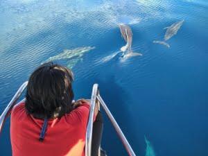 Melihat lumba-lumba di habitat aslinya
