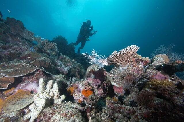 Jadi Relawan Pendata Ikan Karang di Reef Health Monitoring Koon 2018, Yuk?