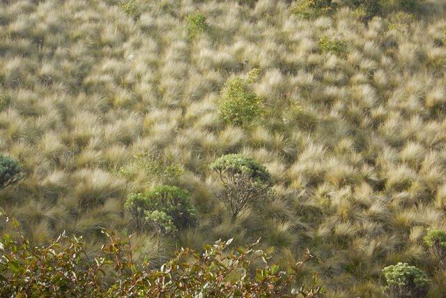 pendakian gunung lawu via cemoro sewu
