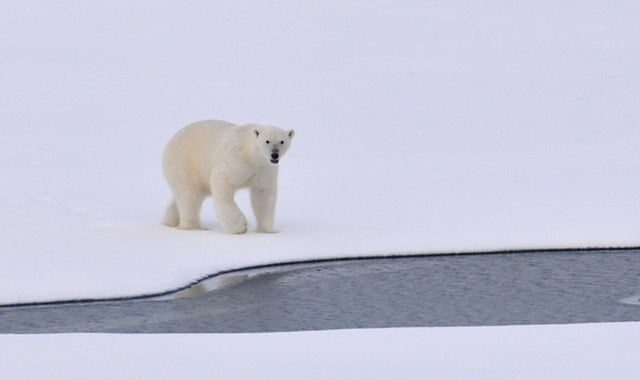 film arctic