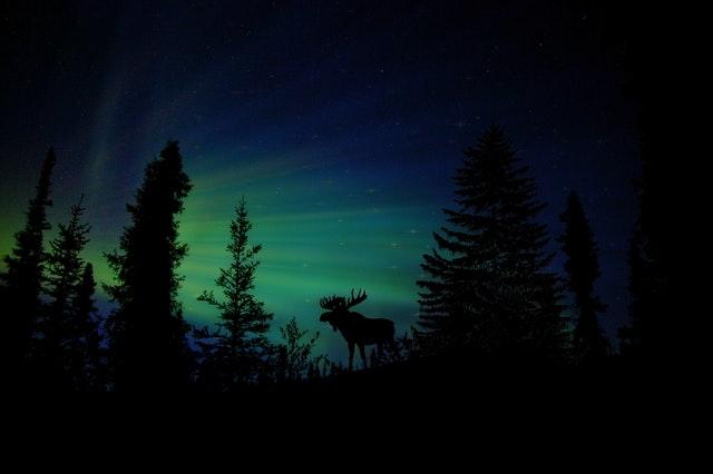 15 Quotes Hutan Yang Bisa Kamu Jadikan Caption Foto Pendakian
