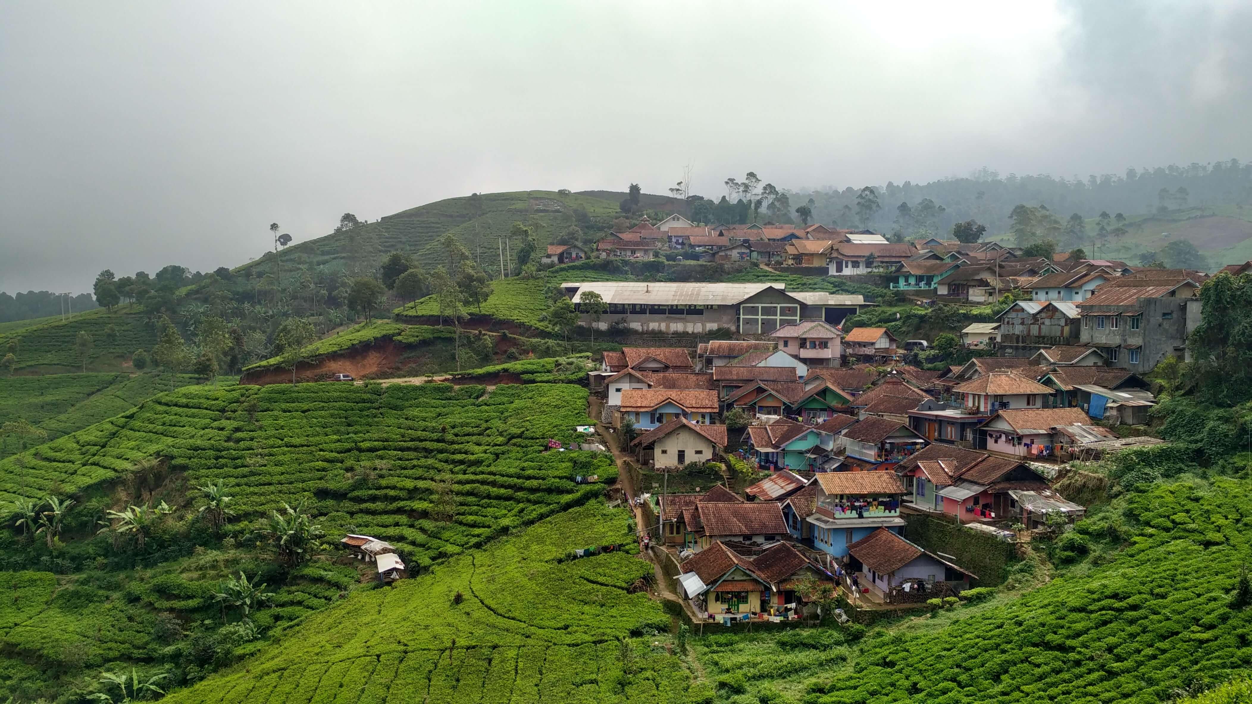 Kebun teh dan permukiman di Pangalengan
