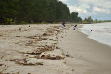Yang Datang Selepas Hujan di Pantai Muaro Mangguang