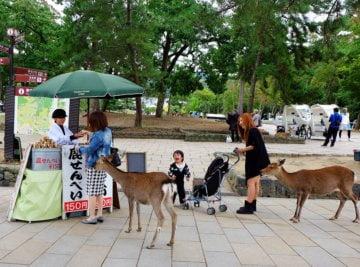 Nara Park dan Rusa-Rusanya yang Sakral