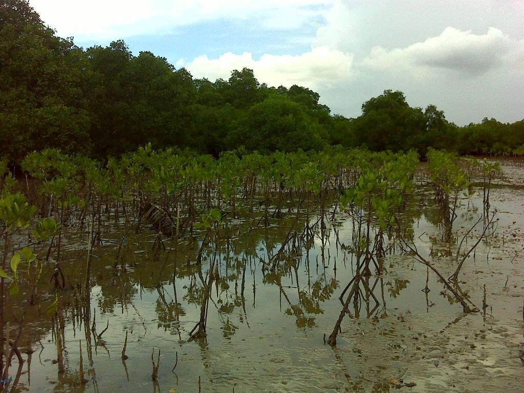 Mangrove Lembung