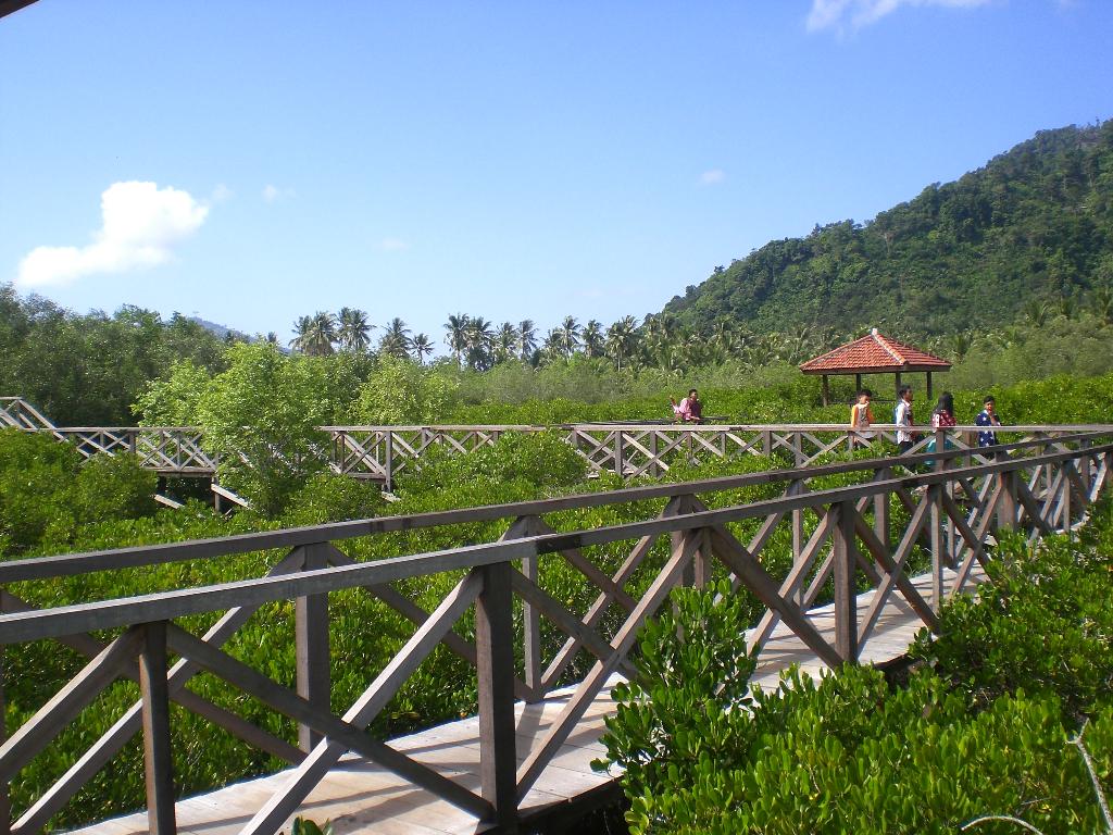 mangrove cengkrong