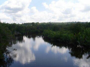 Menyusuri Hutan Lindung Sungai Wain di Balikpapan